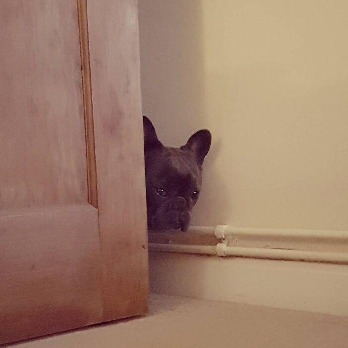Любопытные собачьи носы, которые должны быть в курсе дел хозяина