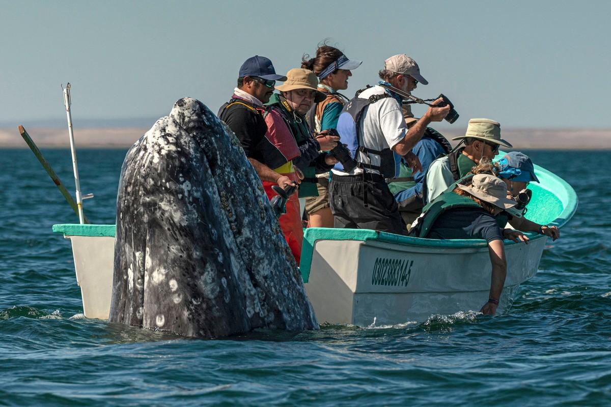 Наблюдатели смотрели в другую сторону, когда кит вынырнул из воды