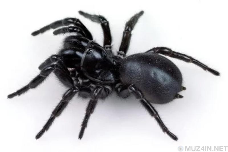 Самые смертельно опасные существа в мире
