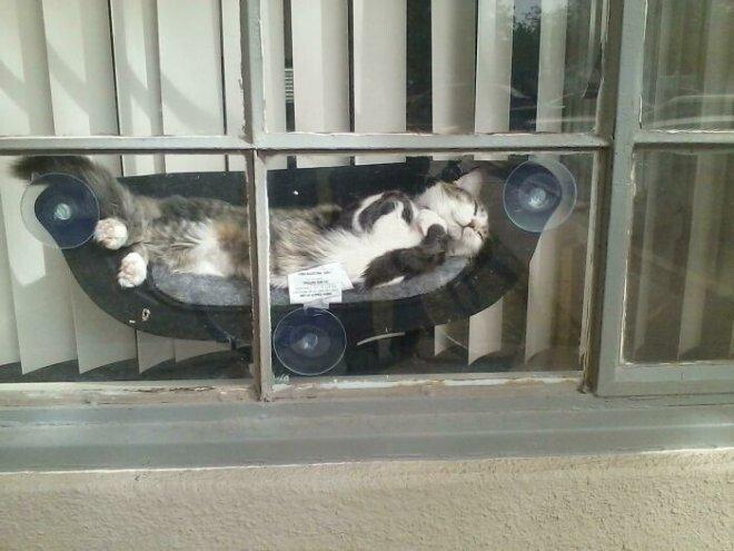 Избалованные кошки, которые живут по своим правилам