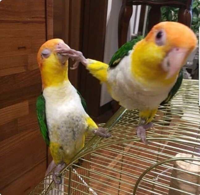 Нагловатые и смешные птицы, с которыми не стоит связываться