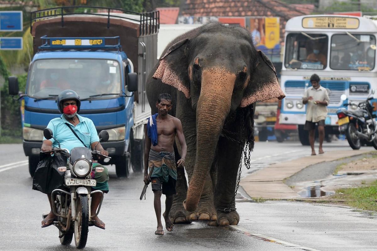 Повседневная жизнь в Шри-Ланке