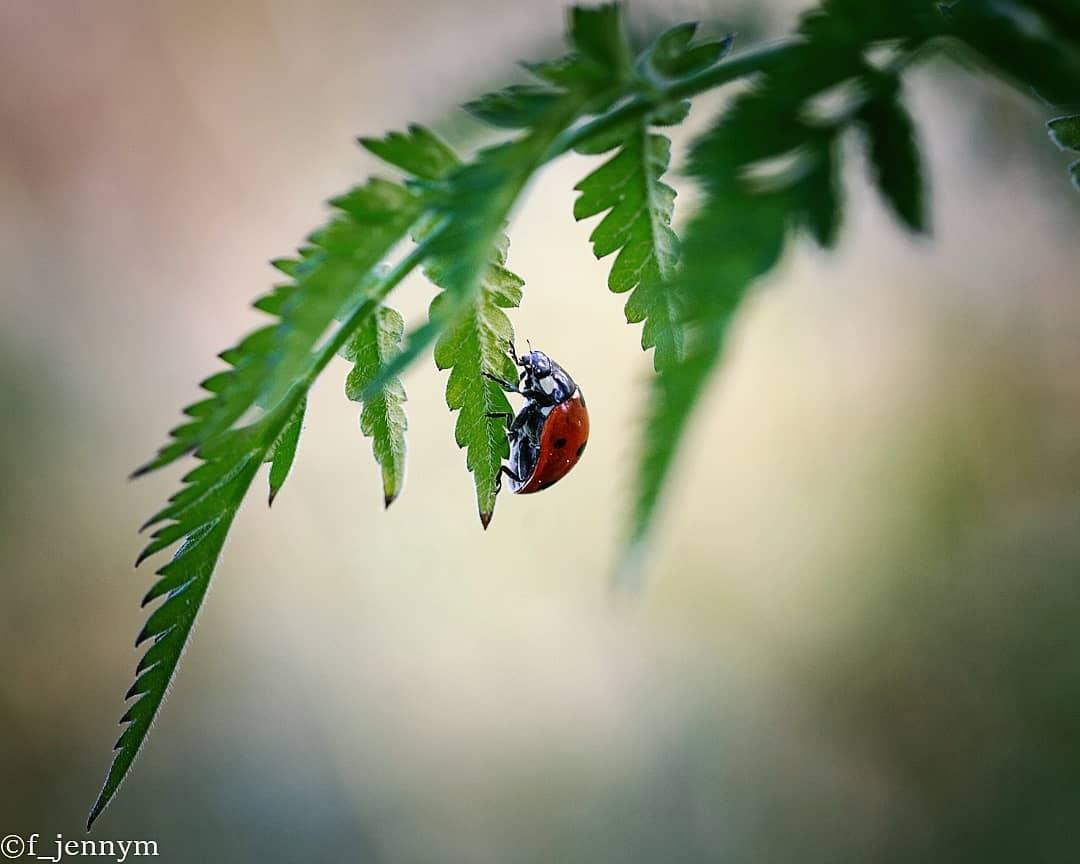 Природа, животные, насекомые и цветы на снимках Дженни Мартенссон