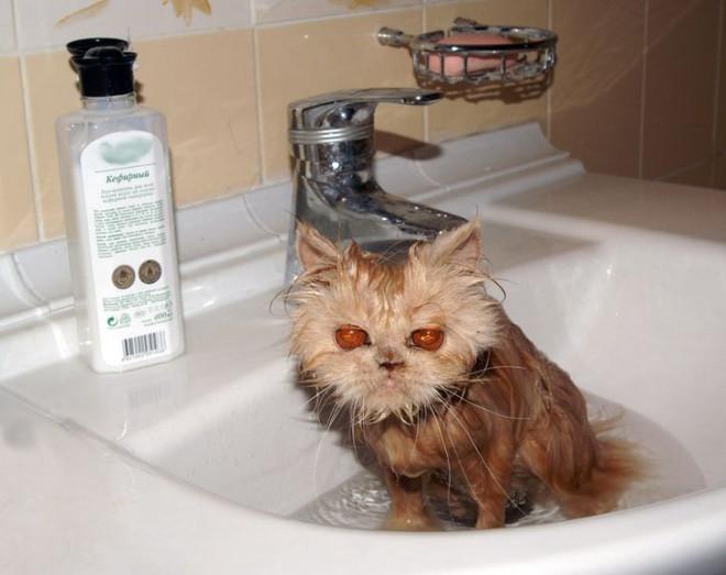 Эти котики явно не простят купания своим хозяевам
