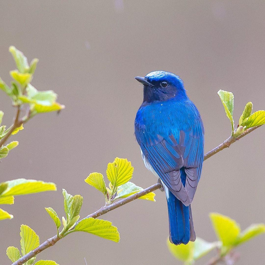Замечательные снимки птиц от Кейсуке Ода