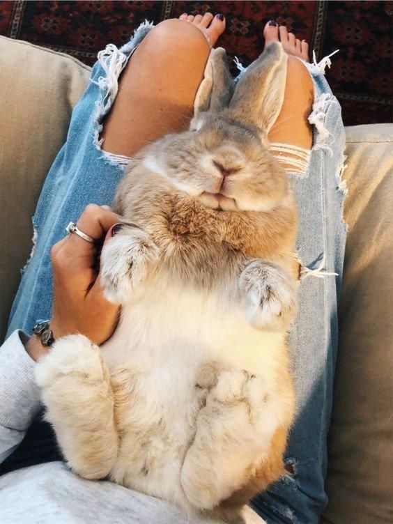 Снимки милейших кроликов, которых вам захочется срочно потискать