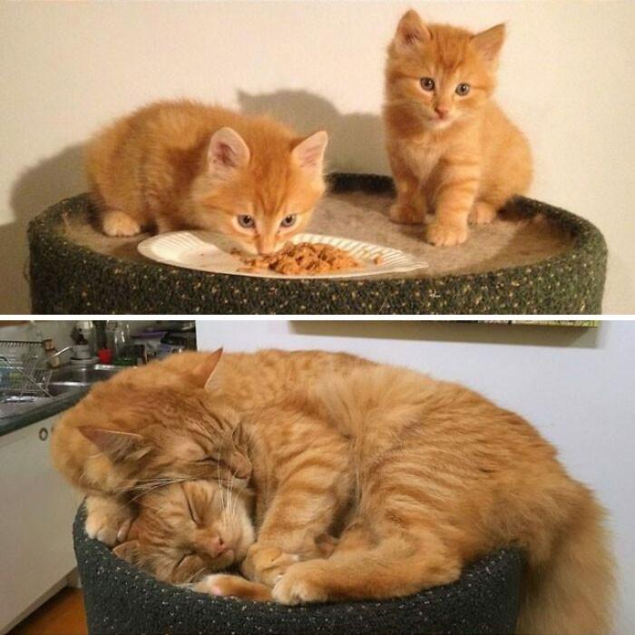 Одна кошка в доме — это хорошо, а две — ещё лучше