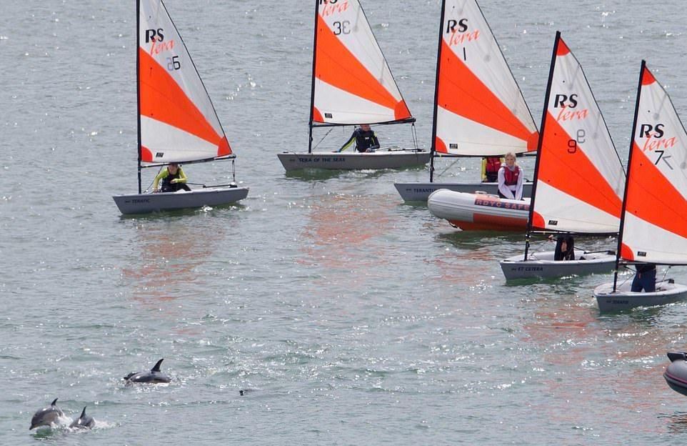 Стая дельфинов подплыла к людям в британской реке