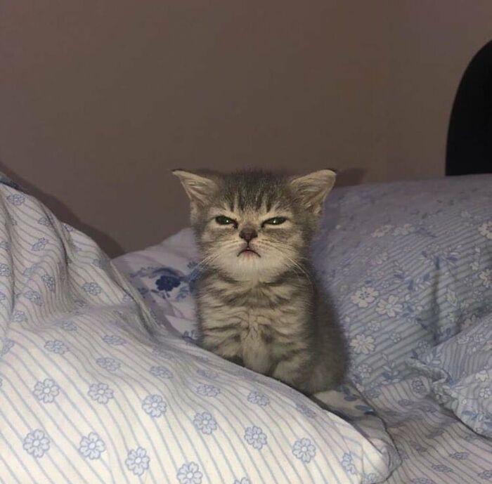 Прелестные котята на снимках Животные