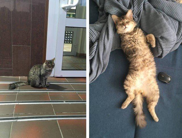 Снимки животных, которые наконец-то нашли свой дом Животные