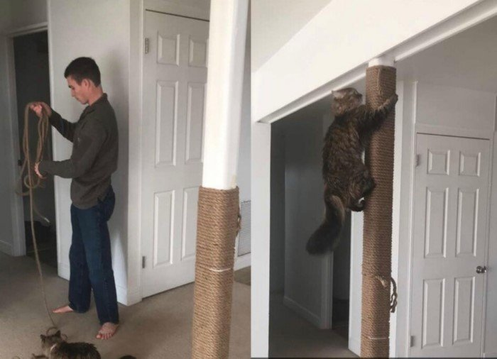Мужчины очень любят котеек, но предпочитают скрывать это