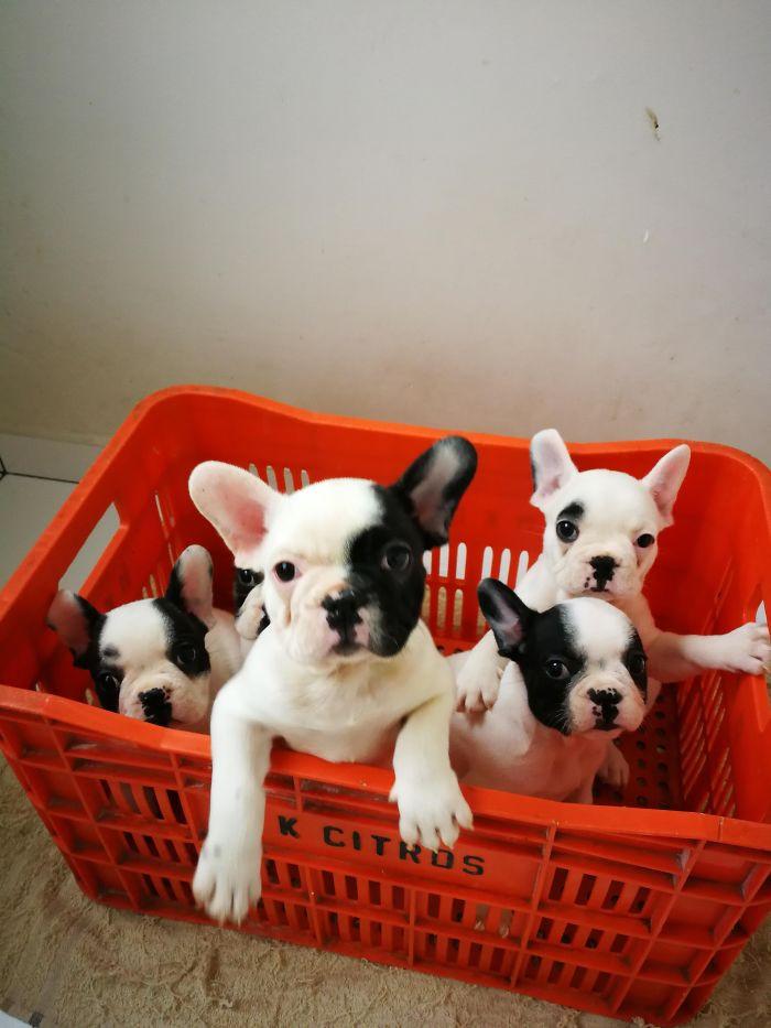 Прелестные щенята на снимках