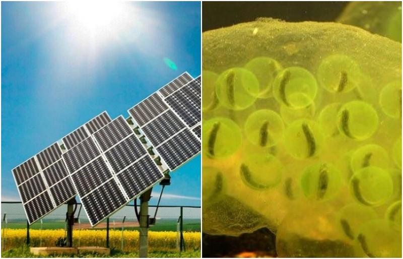Изобретения и технологии, которые люди подсмотрели у природы