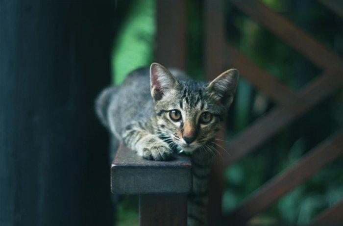 Жесты и выражения кошек, которые легко распознать