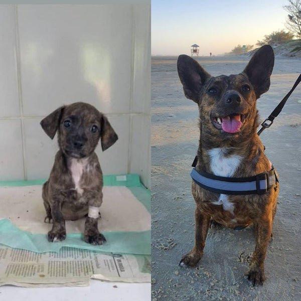 Собаки и котики на снимках до и после того, как они нашли любящий дом
