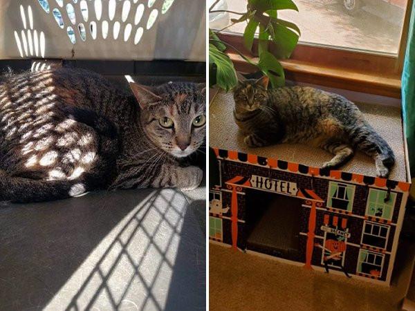 Собаки и котики на снимках до и после того, как они нашли любящий дом Животные