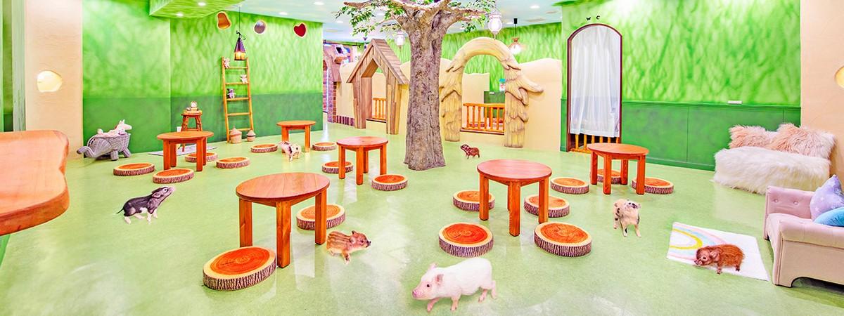 Японские кафе с очаровательными миниатюрными свинками