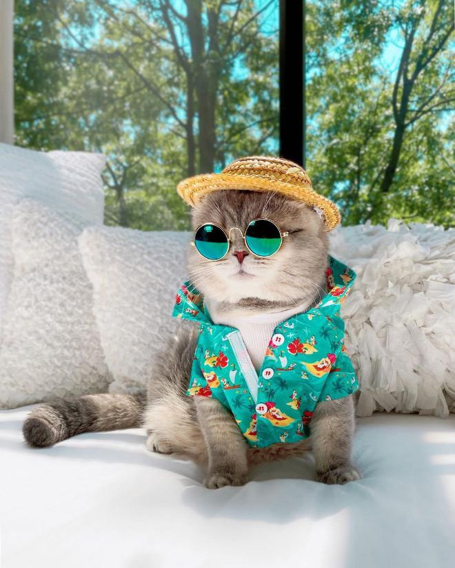 Бродячий кот стал Instagram-знаменитостью благодаря очаровательным нарядам