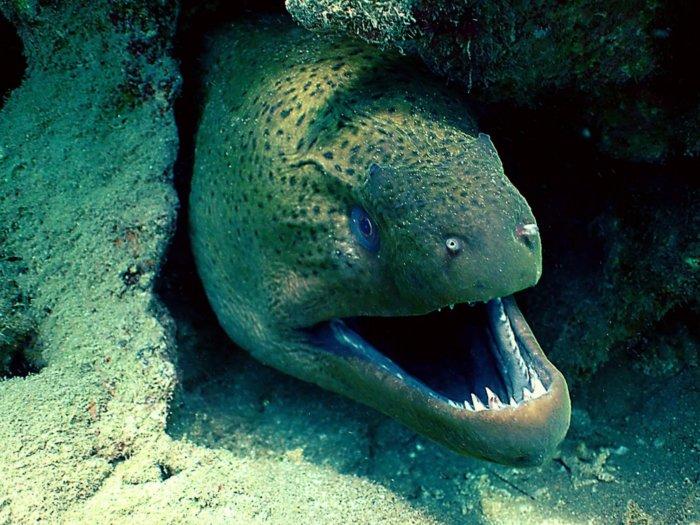 Пять очень ядовитых рыб в мировом океане