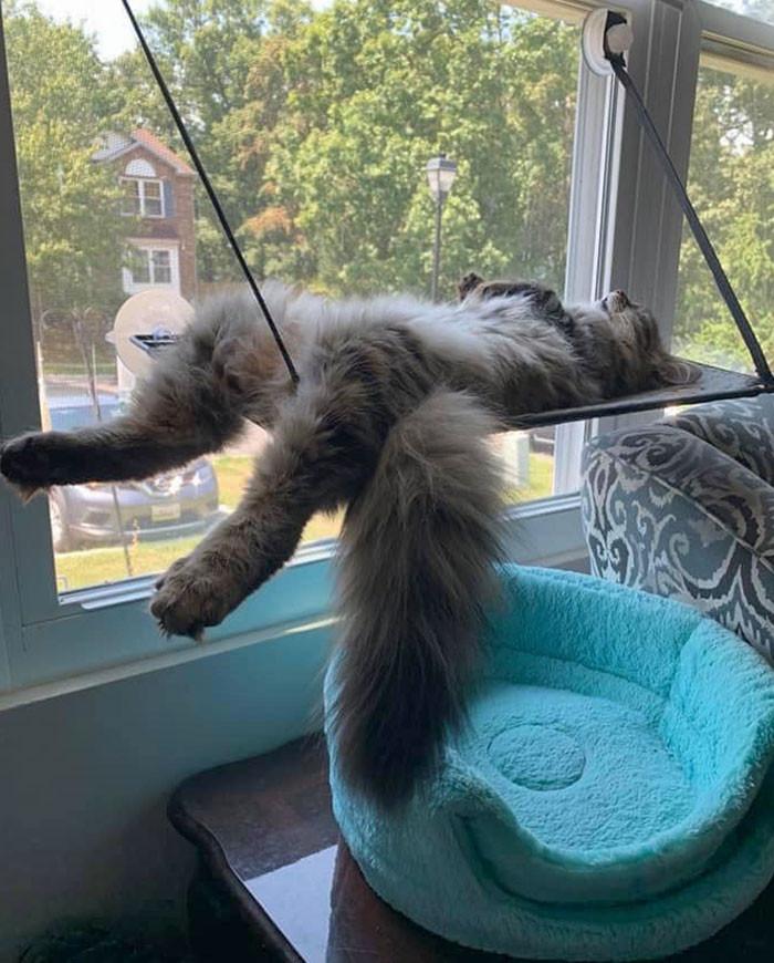 Котики знают идеальный способ провести свободный день Животные