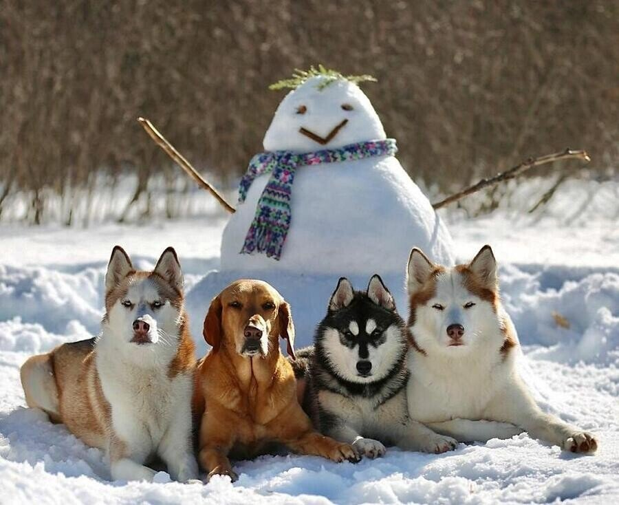 Собачий центр делает невозможное, идеально выстраивая песелей для групповых снимков