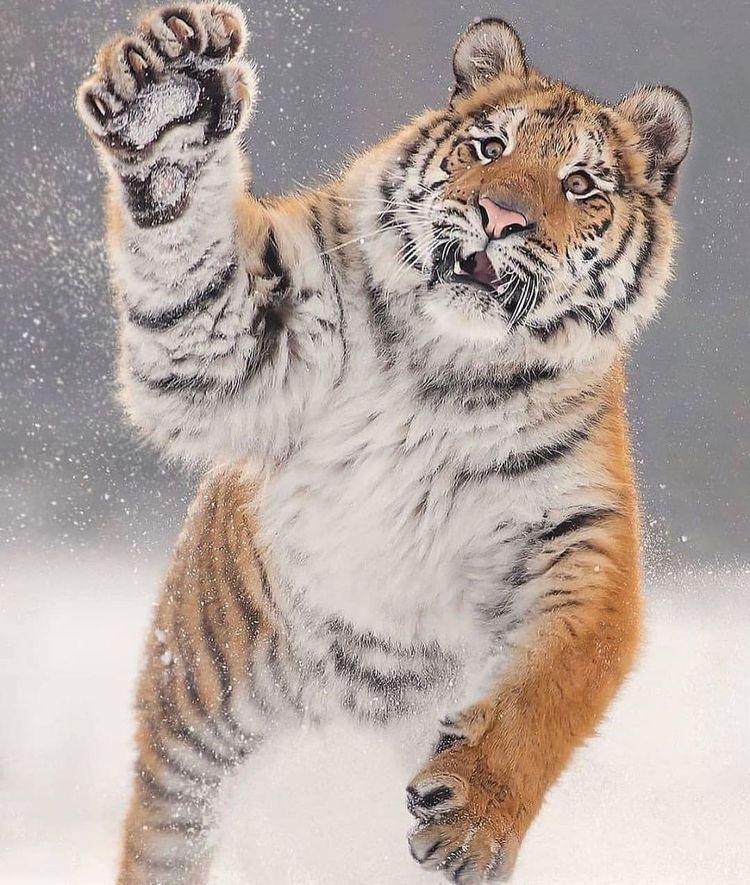 Снимки с животными, которые заряжают позитивом