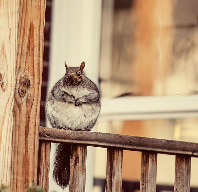 Фотографии самых круглых в мире животных Животные