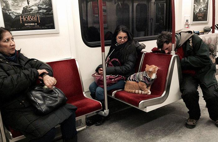 Очаровательные пассажиры, которых можно встретить во время поездки