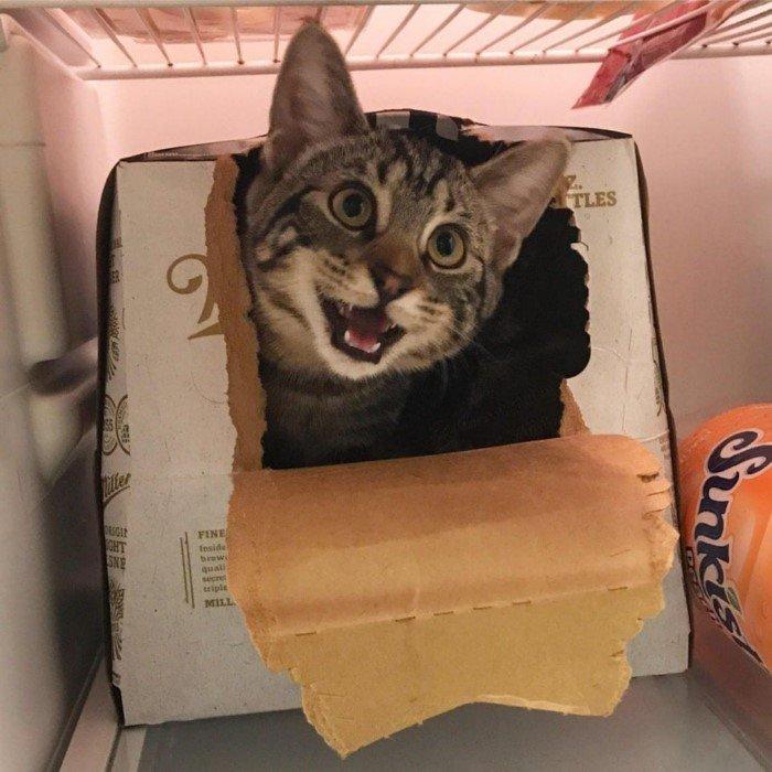 Котики и коробки: они просто созданы друг для друга