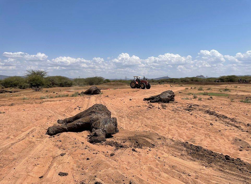 Семью африканских слонов удалось вытащить из грязной лужи в Кении