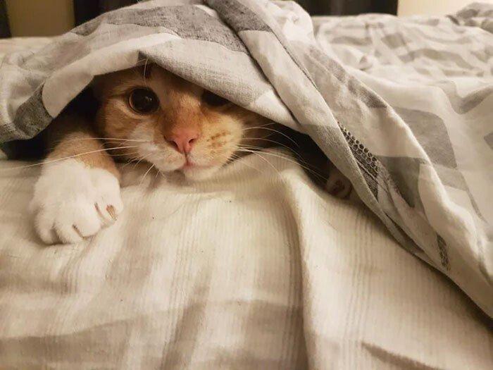 Снимки котеек, после которых вам захочется подремать Животные