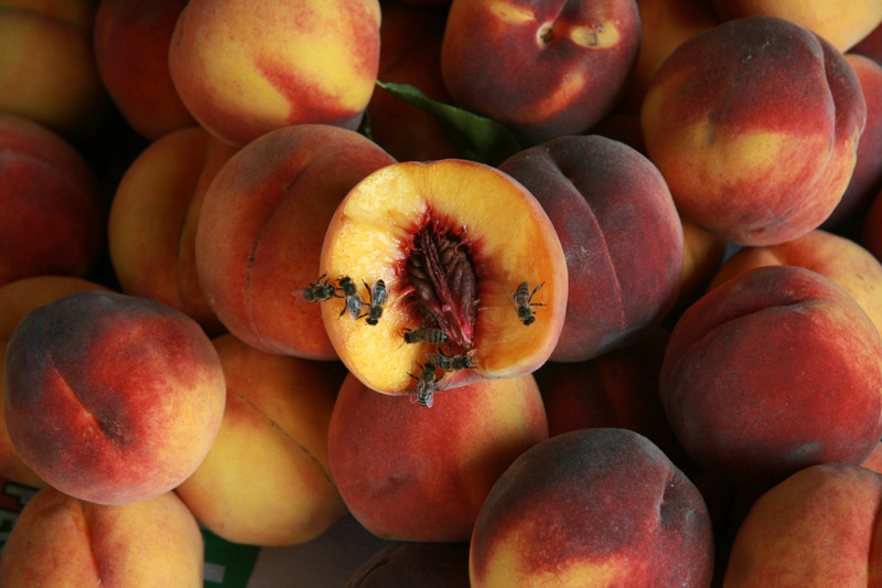 Как правильно выбрать вкусный и сладкий персик