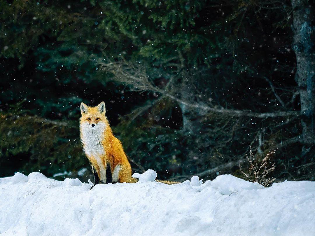 Милые дикие животные и птицы на снимках Кевина Бискаборна