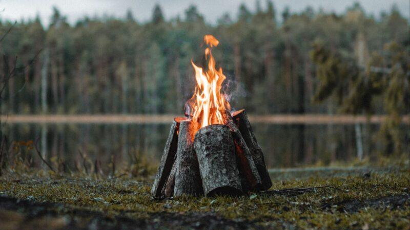 Почему костер не защитит вас в лесу от диких зверей