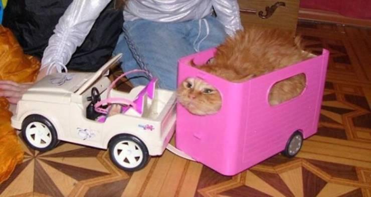 Забавные котейки для хорошего настроения