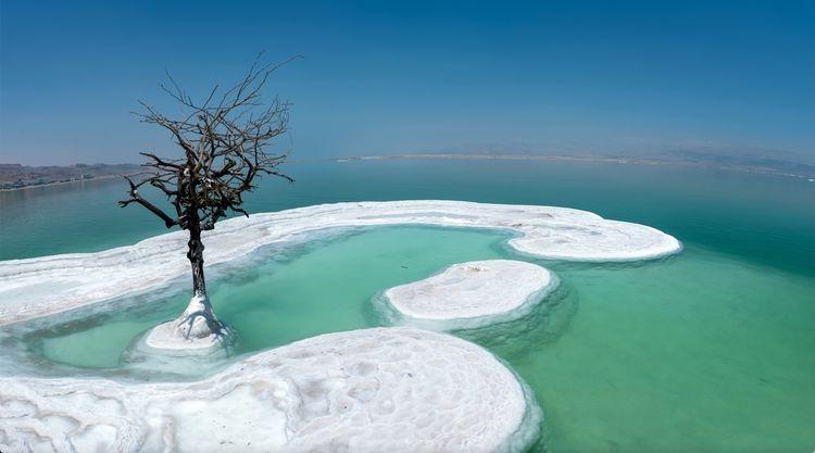 Дерево жизни - одинокое растение посреди Мертвого моря