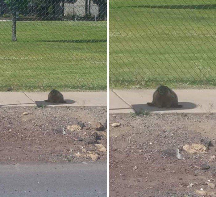 Красноречивые признаки невыносимой летней жары на снимках