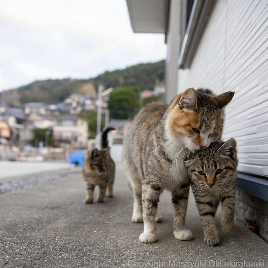 Японские уличные котики на снимках Масаюки Оки