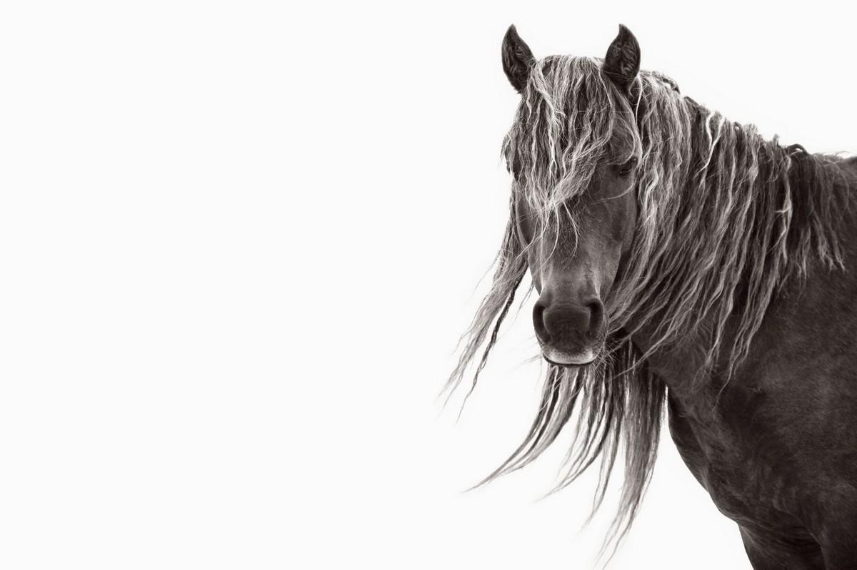 Снимки диких лошадей, живущих на одном из отдаленных островов мира