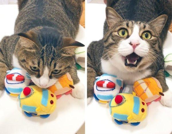 У домашних питомцев тоже есть любимые игрушки