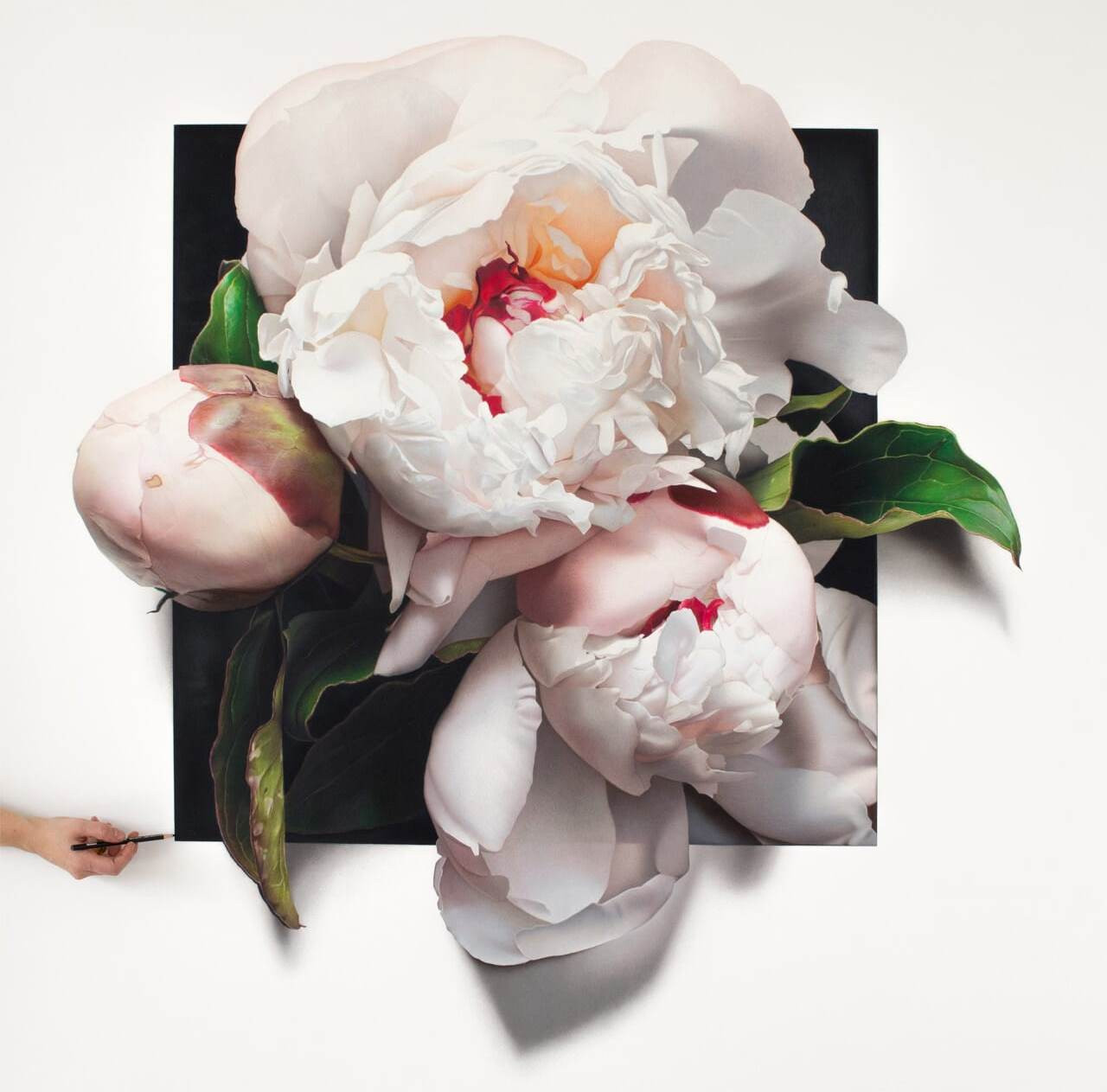 Гиперреалистичные рисунки цветов от австралийской художницы СиДжей Хендри