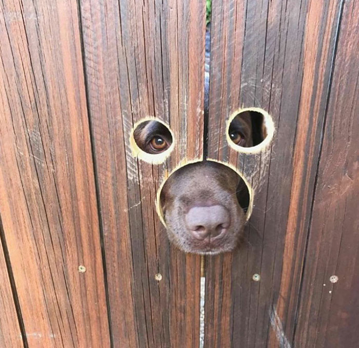 Любопытные собачьи носы, от которых никому не спрятаться