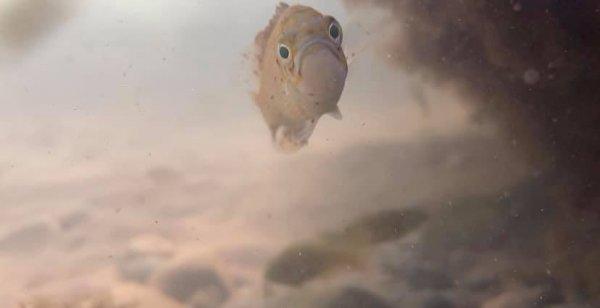 Провальные, но забавные снимки животных из дикой природы