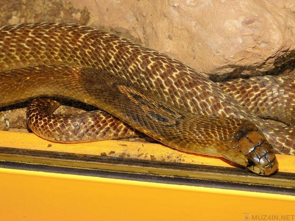 Самые большие змеи из когда-либо зарегистрированных