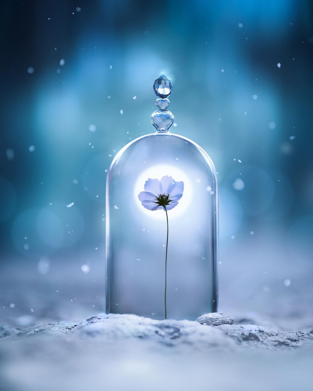 Цветы и предметы на макроснимках Ашрафула Арефина