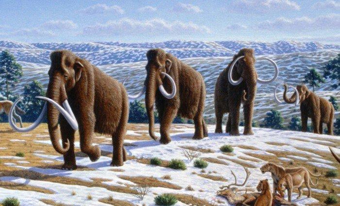 Почему животные стали уменьшаться в размерах?