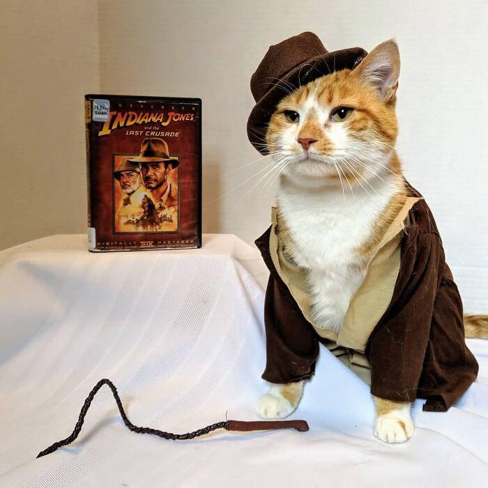 Публичная библиотека привлекает посетителей, наряжая кота в различных персонажей