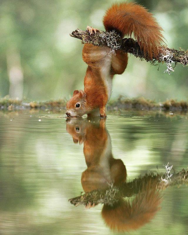 Дикие животные очень близко на снимках