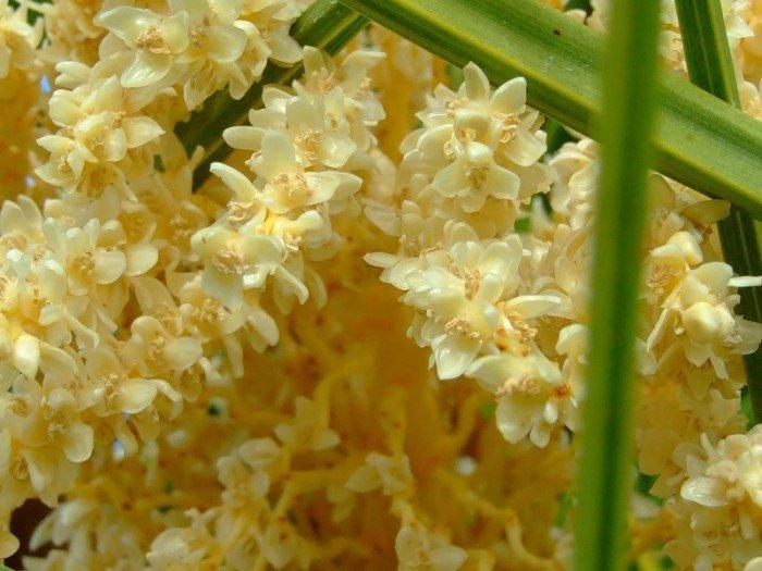 Как выглядят цветы продуктов питания, которые пока еще нельзя есть
