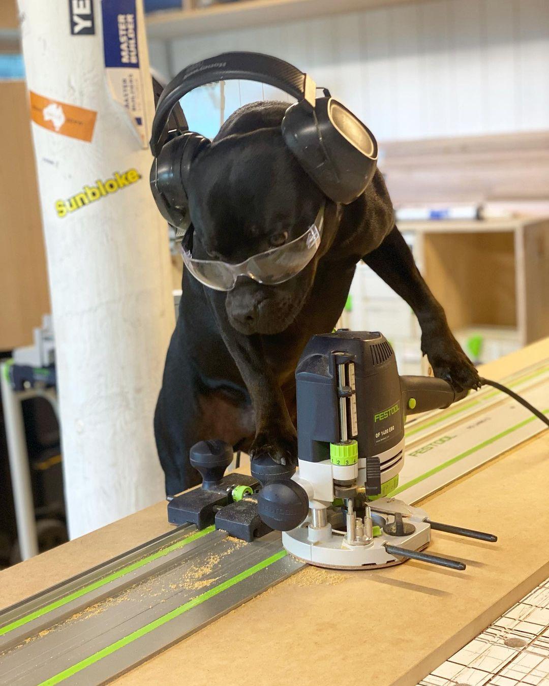 Симпатичный пёсель позирует со строительным инструментом